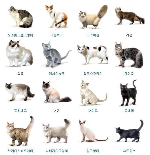 고양이종류2.jpeg